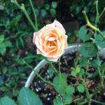 開くことへの怖れ・愛のエロヒム