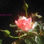 肉体と光・愛のエロヒムのメッセージ